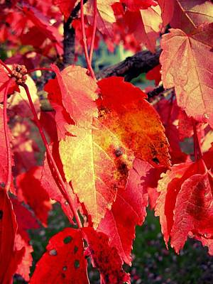 Photograph - Autumn Leaves by Fred Bonilla