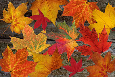 Photograph - Autumn Leaves by Gill Billington
