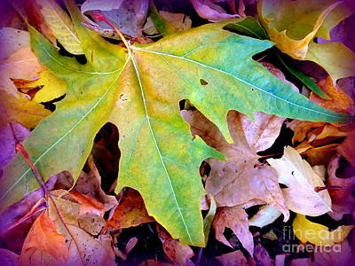 Photograph - Autumn Leaves Heart by Marlene Rose Besso