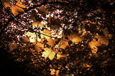 Photograph - Autumn Leaves by Ian Thompson