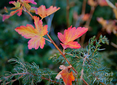 Photograph - Autumn Leaves by Idaho Scenic Images Linda Lantzy