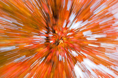 Photograph - Autumn Leaves IIi by Clarence Holmes