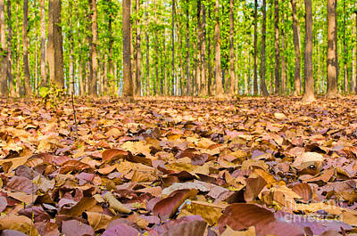 Autumn Photograph - Autumn Leaves by Image World