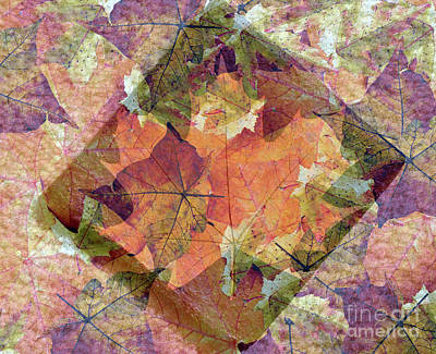 Photograph - Autumn Leaves Impressions by Lydia Holly