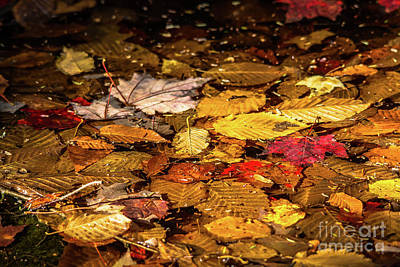 Photograph - Autumn Leaves In A Puddle by Cheryl Baxter