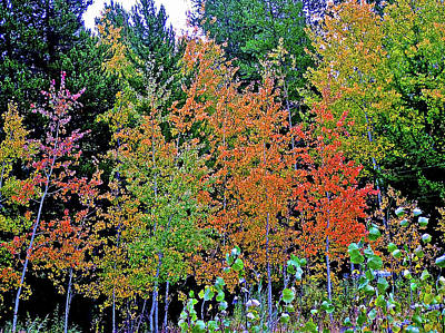Photograph - Autumn Leaves In Grand Tetons National Park, Wyoming  by Ruth Hager