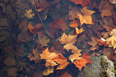 Photograph - Autumn Leaves In Pond by Karen Adams