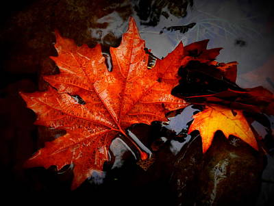 Photograph - Autumn Leaves In Tumut by Lexa Harpell