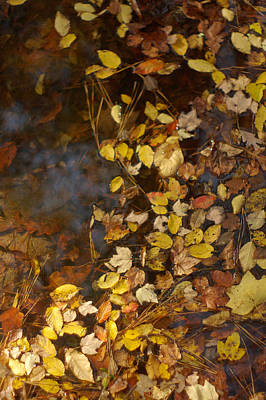 Photograph - Autumn Leaves In Water by Suzanne Powers