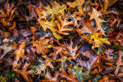 Photograph - Autumn Leaves by James Barber