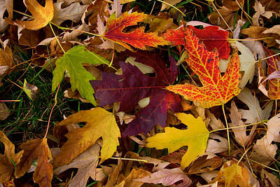 Autumn Leaves Art Print by James BO  Insogna