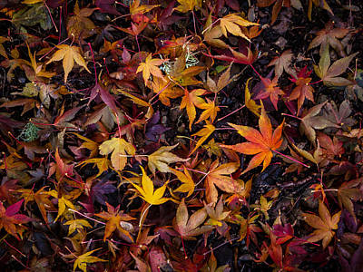 Photograph - Autumn Leaves  by Jean Noren