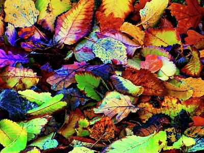 Photograph - Autumn Leaves by Jennifer Baulch