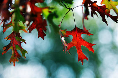 Photograph - Autumn Leaves by Jill Reger