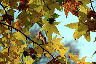 Photograph - Autumn Leaves by Joanne Coyle