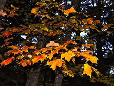 Autumn Photograph - Autumn Leaves by Kathleen Sartoris