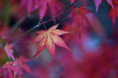 Photograph - Autumn Leaves by Keith Boone