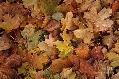 Autumn Leaf Photograph - Autumn Leaves by Lutz Baar