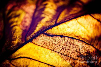 Autumn Leaves Macro Print by Raimond Klavins