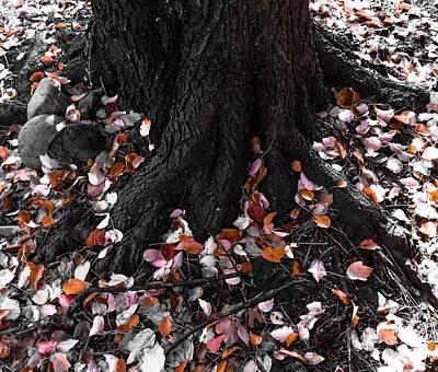 Autumn Leaf Photograph - Autumn Leaves by Marianna Mills