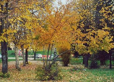 Photograph - Autumn Leaves by Marija Djedovic