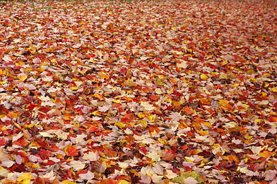 Photograph - Autumn Leaves by Marilyn Wilson