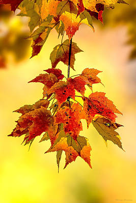 Photograph - Autumn Leaves by Marty Saccone