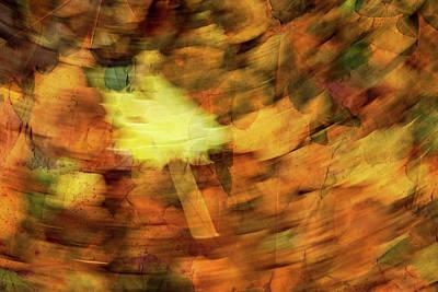 Photograph - Autumn Leaves by Michael Mogensen