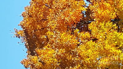 Photograph - Autumn Leaves by Michelle Jacobs-anderson