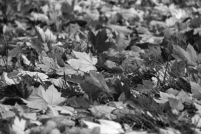 Photograph - Autumn Leaves by Michiale Schneider