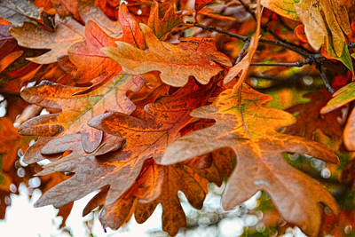 Photograph - Autumn Leaves - Nature Photography by Ann Powell