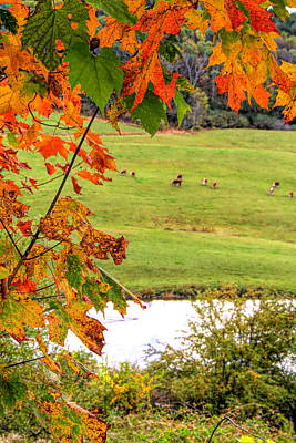 Photograph - Autumn Leaves On The Farm by Dan Sproul