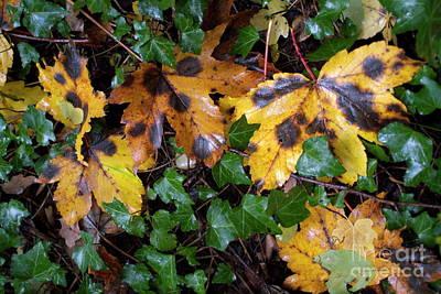 Autumn Leaves On The Ground Art Print by Sami Sarkis