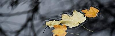 Photograph - Autumn Leaves On The River by Werner Lehmann