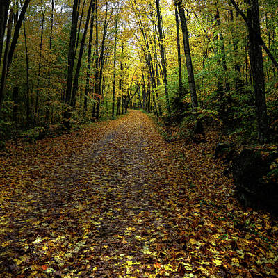 Print featuring the photograph Autumn Leaves On The Trail by David Patterson