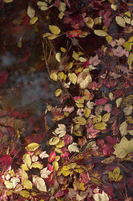 Photograph - Autumn Leaves On The Water by Suzanne Powers