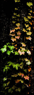 Orange Photograph - Autumn Leaves by Parker Cunningham