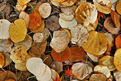 Photograph - Autumn Leaves by Patricia Strand