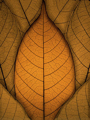 Photograph - Autumn Leaves by Paul Wear