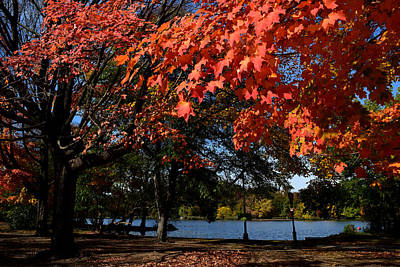 Photograph - Autumn Leaves Prospect Park Brooklyn by Diane Lent