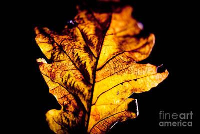 Autumn Leaves  Print by Raimond Klavins