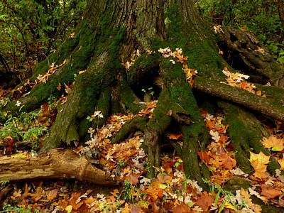 Wall Art - Photograph - Autumn Leaves by Robert Papps
