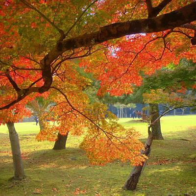 Photograph - Autumn Leaves by Roberto Alamino