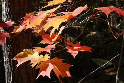 Photograph - Autumn Leaves by Ron Read
