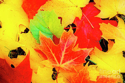Photograph - Autumn Leaves by Scott Kemper