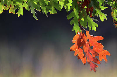 Photograph - Autumn Leaves Setauket New York by Bob Savage
