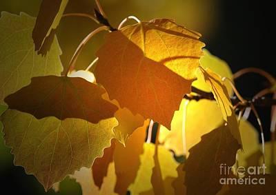 Autumn Leaves Art Print by Sharon Talson