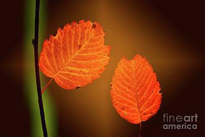 Photograph - Autumn Leaves by Steven Parker