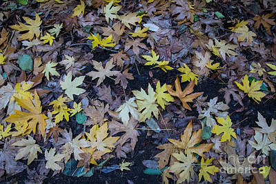 Photograph - Autumn Leaves by Suzanne Luft