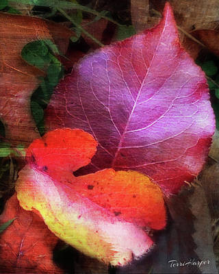 Photograph - Autumn Leaves by Terri Harper